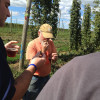 Hop Head Farms announces expansion, adds 140 acres of land for Michigan hop production